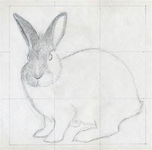 Simple Animal Drawings In Pencil Continue The H Strokes ...