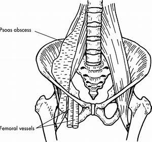 Anatomy Q
