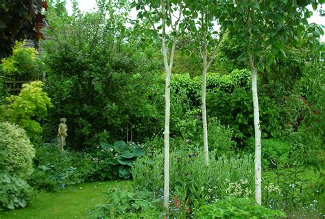 gardens with trees in the garden creative home life