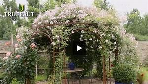 Support Pour Rosier Grimpant : comment tailler un rosier selon sa vari t jardinerie ~ Premium-room.com Idées de Décoration
