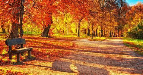 Autumn Wallpapers 4k by Autumn Leaves Park 4k Ultra Hd Wallpaper Ololoshenka