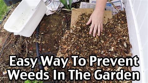 prevent weeds in garden an easy way to mulch and prevent weeds in the garden youtube
