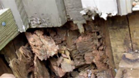 fix termite damage  homes    youtube