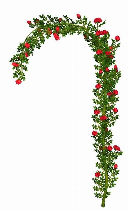 Arch Clipart Rosebush Element Flores Yopriceville Elements