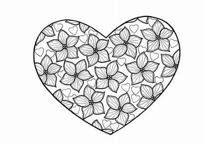 Coloring Heart Adult True Hearts Flowers Inside