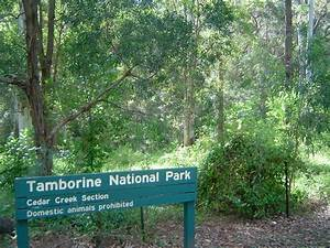 Tamborine National Park | Wiki | Everipedia