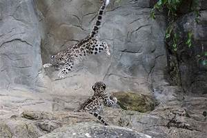 Zoo Zrich Zooschweiz