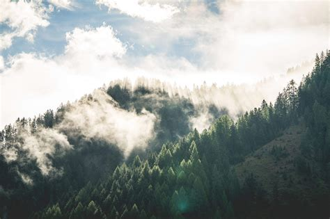 beautiful morning mountain forest scenery free