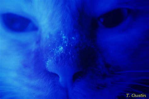 Woods L Examination In Dogs dermatophytosis ringworm feline medicine