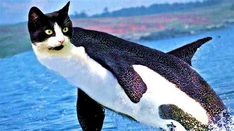 Strange Animal Photoshop Fails
