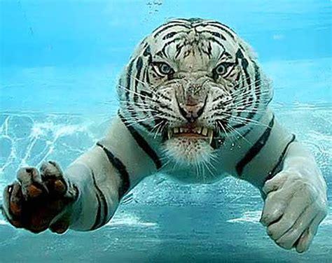 amazing animals close  xcitefunnet