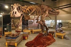 T.rex Discovery Centre   Tourism Saskatchewan