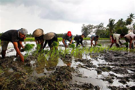 helping seaweed farming flourish  typhoon hits