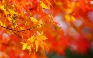 Ahorn Rote Blätter : herbst ahorn rote bl tter verschwommen hintergrund 1920x1200 hd hintergrundbilder hd bild ~ Eleganceandgraceweddings.com Haus und Dekorationen