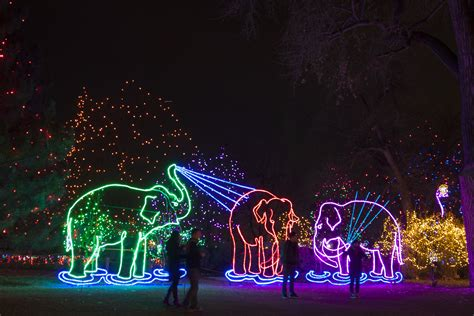 zoo lights glow packages now on sale
