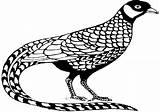 Tiere Ausmalbilder Malvorlagen Fasan Ausdrucken Zum Ausmalen Drucken Kostenlose Gemerkt Gerne Koennen Auch Sie sketch template