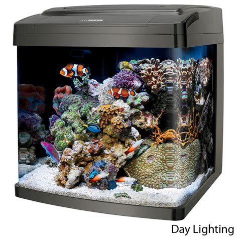 coralife biocube aquarium 29 14 gallon petsolutions