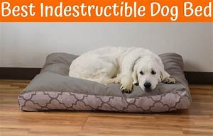 Best indestructible dog bed in 2017 us bones for Undestroyable dog bed