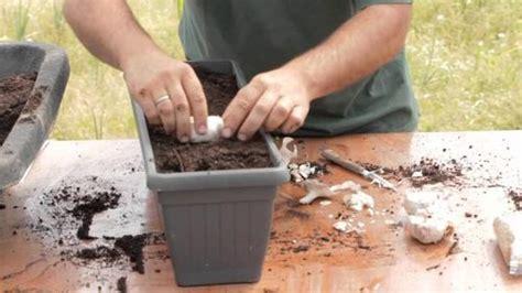 comment planter de l ail et de l oignon chez vous