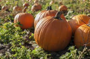 Pumpkin Patch Amarillo Tx by Fun Things To Do In The Texas Panhandle During The Fall