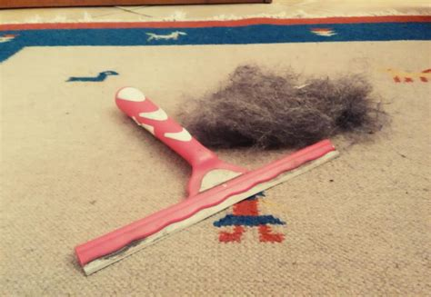 pulire i tappeti in casa puliscivetri per rimuovere dai tappeti il pelo di animale