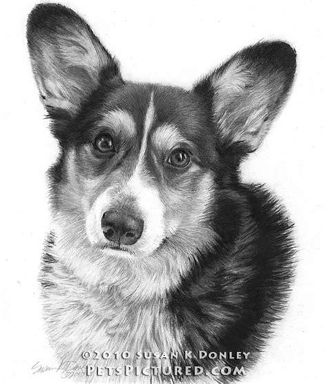 Corgi Dog Drawings Pencil