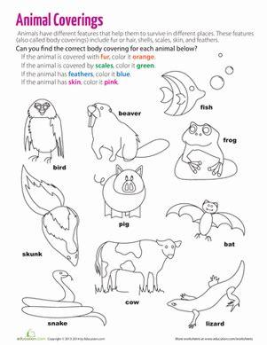 coverings of animals worksheet education