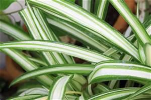 robuste zimmerpflanzen und pflanzen fur den garten With garten planen mit robuste zimmerpflanze