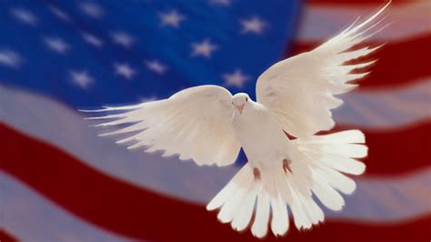 american flag  white dove  peace hd wallpapers