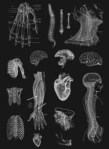 Best Anatomy Books 2020