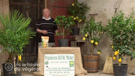 planter un oranger en pot comment planter un citronnier ou un oranger