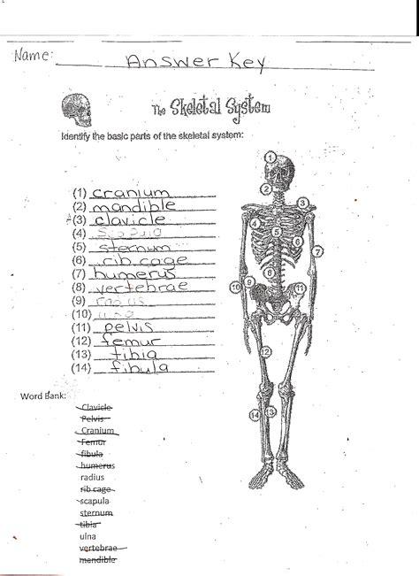 the skeletal system worksheet answer key mckenna mrs home page