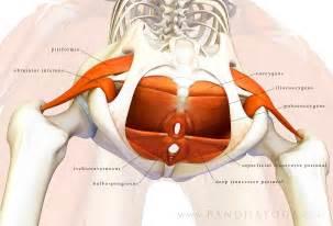 asktheexpert anastasia uvarova the pelvic floor part 1