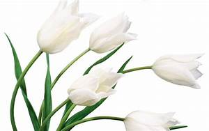 flowers for flower lovers.: Beautiful white flowers ...
