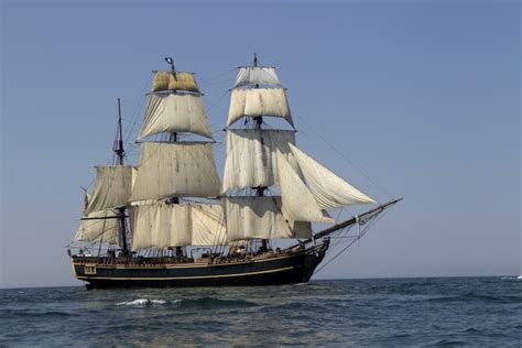 pauline s pirates privateers horror on the high seas