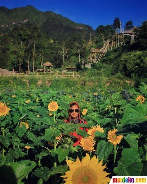 foto spot wisata   boyolali kebun bunga matahari