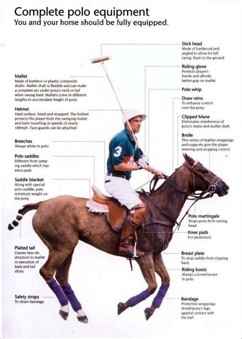 polo equipment horse riding gear equestrian saddles play infographic sport game english saddle tack horses club need posters equine stuff