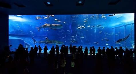 le plus grand aquarium de le plus grand aquarium du monde