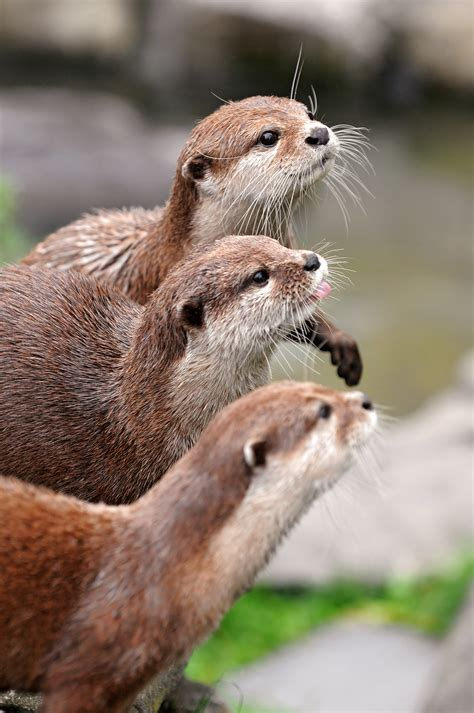 Otters Online Dungeon Master