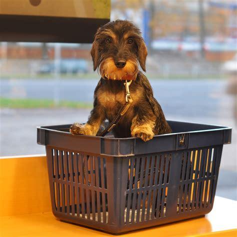 legge sull ingresso dei cani nei luoghi pubblici legge cani locali pubblici cani ammessi nei locali