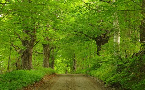 green forest road  ultra fond decran hd arriere plan