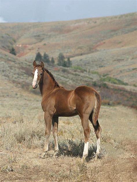 saddles horse