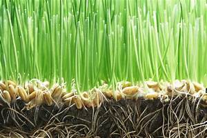 Grass Seed Germination Rates For Planting