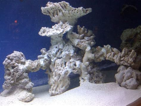 Live Rock Aquascape Designs by Best 25 Reef Aquascaping Ideas On Reef