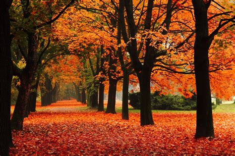 Fall Computer Backgrounds by Fall Computer Backgrounds 76 Images