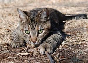 Stalking Cat Man Tattoo Pictures to Pin on Pinterest