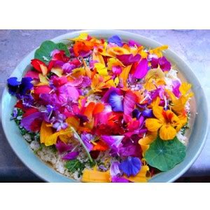 cuisiner avec des fleurs cuisiner avec les fleurs tambouille tout