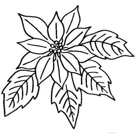 poinsettia drawing outline    clipartmag