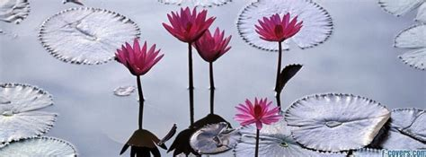 flowers lotus facebook cover timeline photo banner  fb