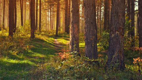 Download wallpaper 2560x1440 forest, path, trees ...